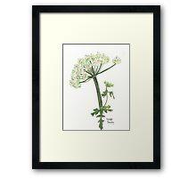 Hedge Parsley Framed Print
