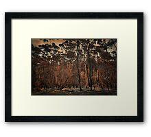 Destructive forest fires, Hermanus,SA Framed Print
