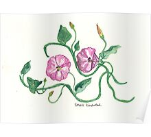 Small Bindweed Poster