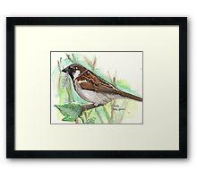 Male House Sparrow Framed Print