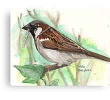 Male House Sparrow Canvas Print