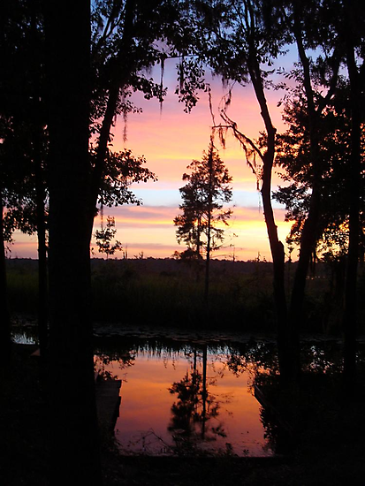 JULY SUNSET ON ECONFINA CREEK by May Lattanzio