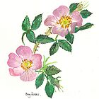 Dog Roses by Sam Burchell