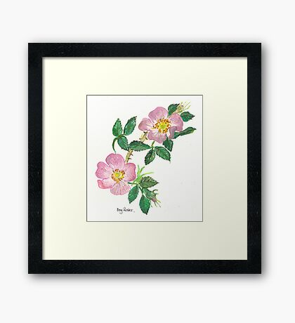 Dog Roses Framed Print
