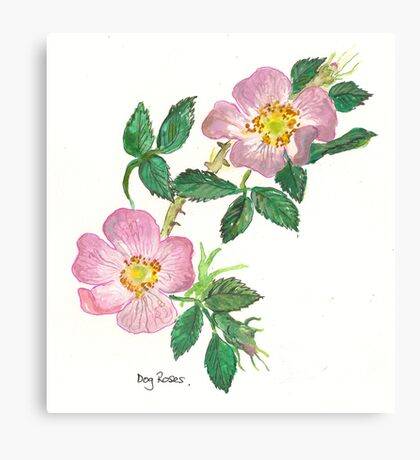Dog Roses Canvas Print