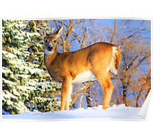 Winter Deer Poster
