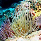 Caribbean Coral Reef Giant Sea Anemone group and Arrow Crab by Amy McDaniel