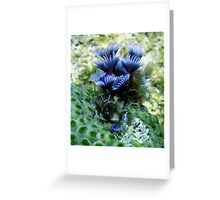 Social Feather Duster Worms on Coral Reef in the Caribbean Greeting Card