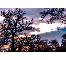Winter sunset across the treetops Photographic Print