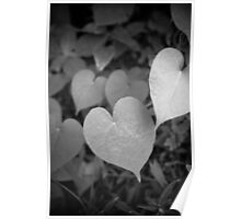 Field of Hearts Poster