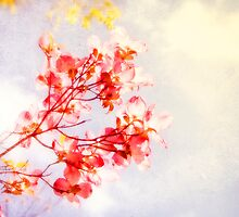 Blossoms by Heather Reid