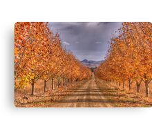 Autumn Leaves - Gulgong,NSW - The HDR Experience Canvas Print