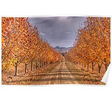 Autumn Leaves - Gulgong,NSW - The HDR Experience Poster