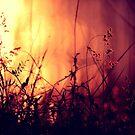 Summer nights by Beata  Czyzowska Young