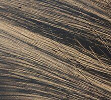 Dune 1062 by João Castro