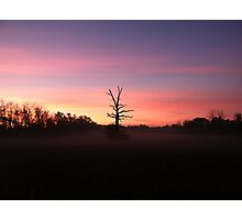 Morning Wood  Photographic Print