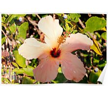 Hibiscus in pixie light Poster