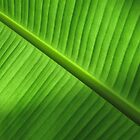 Banana Leaf by Stephen Oravec