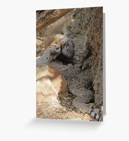 Squirrel vs. Rattler Greeting Card