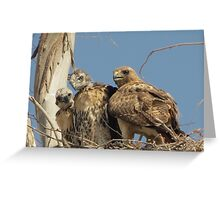 Red-tailed Hawks ~ Morning Teachings Greeting Card