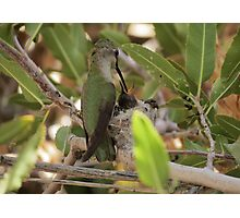 Anna's Hummingbird~ Mothers Touch Photographic Print