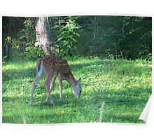 Deerest Baby Poster