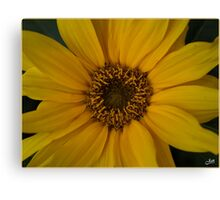 Sun is Shining. Canvas Print