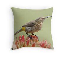 Nectar on Tap Throw Pillow