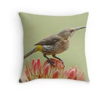 Nectar on Tap Throw Pillow