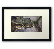 Eastern Water Dragon III Framed Print