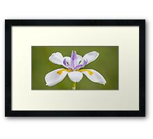 Fairy Iris Framed Print