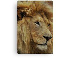 lion mane Canvas Print