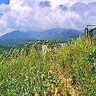 Crimea's Wildflowers by fiat777