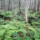 Fern Gully Revisited 1 by Geoff Smith