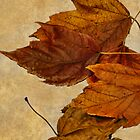 Autumn Leaves by Joy  Rector