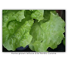 Home Grown Lettuce á lá Nordic Cuisine Including Ant Photographic Print