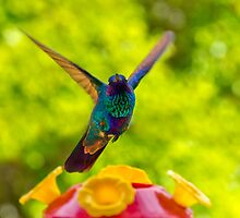 Hummingbird Winging Away by Al Bourassa