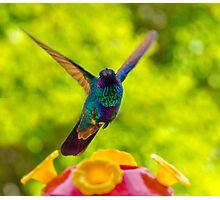 Hummingbird Winging Away Photographic Print