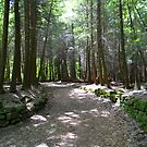 Cuyahoga Valley National Park Trail by Debbie  Maglothin