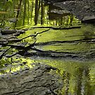 Reflection of an Ohio Forest Canopy by Debbie  Maglothin
