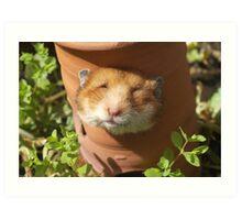Hamster head Art Print