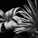 Daisies In Black and White by WildestArt