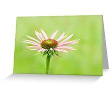 Purple Coneflower (Echinacea purpurea) Greeting Card