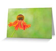 Echinacea paradoxa Greeting Card