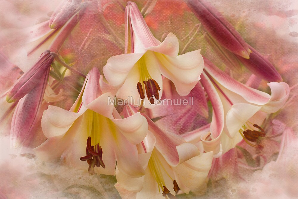 Lily Revelry by Marilyn Cornwell