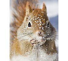 Harsh winter Photographic Print