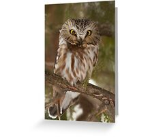 Northern Saw-whet Owl in winter Greeting Card