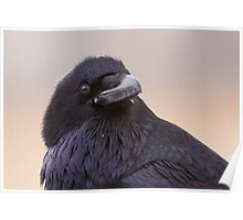 Raven attitude Poster
