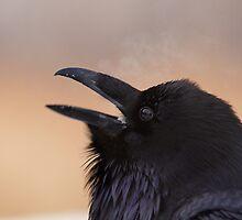Raven in winter by MIRCEA COSTINA