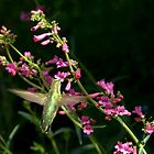 Hummingbird with Penstemon Blossoms  by Diana Graves Photography